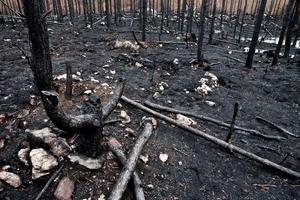 Med branden försvann de platser många älskade.Foto: Lennye Osbeck