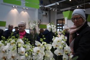Ett hav av blommor mötte besökarna när Blomsterlandet slog upp portarna i nya lokaler på Stallsiken