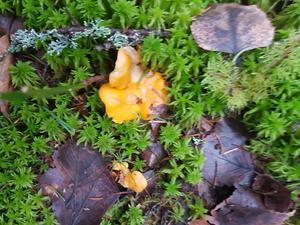 Så här såg det ut i skogen någonstans mellan Västerås och Ransta. Foto: Patrik Zva