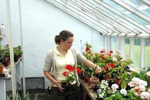 GRÖNT JOBB. Josephina Wesström från Skärplinge är utbildad trädgårdsmästare i Ockelbo. Nu har hon tagit över drivhuset i Lövstabruk.