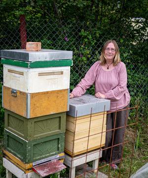Bikuporna ger mycket honung, något som man kan göra mycket med av i matlagningen eller äta direkt. Foto: Bengt Pettersson