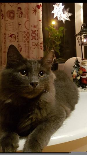 Katten heter Sotis och blir snart 7 månader. Bild: Marie