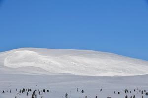 På Salsfjellet syns raset av den senaste lavinen.