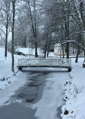Vintern en tid då naturen nästan blir naturligt svartvit. Varje årstid har sin skönhet. Foto: Liselotte Eriksson