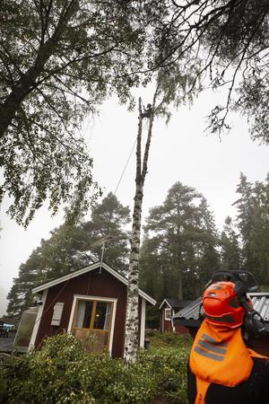 Petra Pavlovská står 15 meter ovan marken i trädes grenklyka.