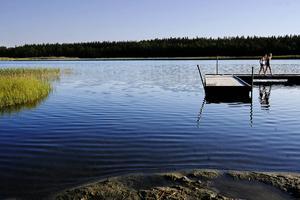 Lillsjön påverkas av det dagvatten som leds dit från Odenskog. Bland annat finns en risk för att utrotningshotade alger försvinner när vattnet blir allt mindre klart.