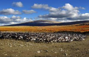 Ny forskning visar att renar kan förhindra effekterna av ett varmare klimat.