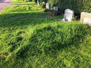 Bilden är från den 9 augusti i år och visar frodigt gräs på en av de gravar där den nya klippavgiften är obetald.