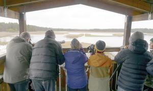 18 tappra fågelskådare sökte sig till Ändsjön. Här några av de spanande Foto: Ingvar Alkemar