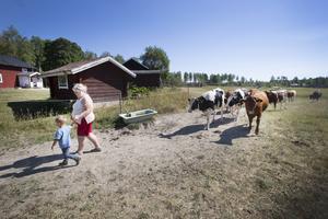 Lotta Zetterlund och hennes man närmar sig pensionen och hoppas att en av sönerna tar över gården med 150 djur i Storvik.
