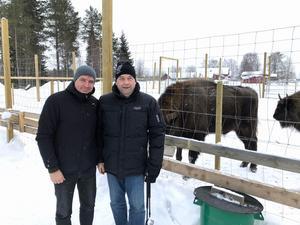 Kommunalrådet Lars Isacsson (S) och Börje Forslund besökte visenterna i Kuusamo.Foto: Timo Majava