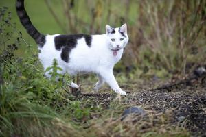 Kvinnan förbjuds nu helt att ha djur efter att under flera års tid låtit katterna leva i ostädade förhållanden. Katten på bilden har inget med händelsen att göra. Foto: Fredrik Sandberg/TT