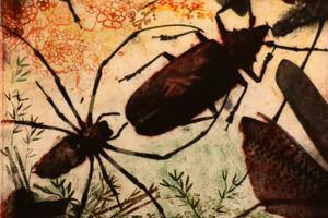 Närgånget. Mari Melin brukar mest hålla på med grafik och under utställningen får man komma nära insekterna hon skildrar.