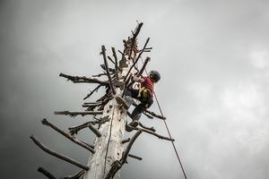 Oskar Granström, 8 år från Sollentuna var inte rädd att klättra i träd. Han tog sig snabbt nästan ända upp i toppen, och tyckte inte alls att det var läskigt.