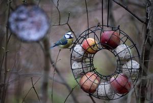 Ett kul alternativ till att bara hänga upp talgbollar eller äpplen i snören.