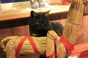 Det blir inget mer julfirande med vår katt Svartis. Foto: Henrietta Munck af Rosenschöld