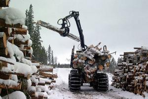 På måndagen stoppade Mellanskog all sin avverkning i skogarna i Hälsingland och Härjedalen. Ett 30-tal entreprenörer drabbas.Foto: hans-råger bergström