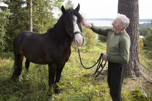 Travtränaren och uppfödaren Michael von Krusenstierna hemma på gården i Slåtte Alsen med ett av hans framgångsrika kallblod, Krusen, som startar i kallblods-SM på Bergsåker på lördag.