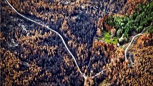 Flygbilderna visar den årliga förändringen i området efter branden. Skillnaden mellan de två senaste åren visar hur lång tid det tar för skogen att växa sig lika stor igen.