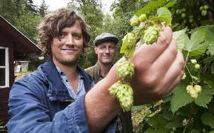 Får Oskar Sohlgren och Henrik Lindgren från Isala som de vill kommer de här humlekottarna bidra till ett öl med en unik smak. Foto: Mikael Forslund