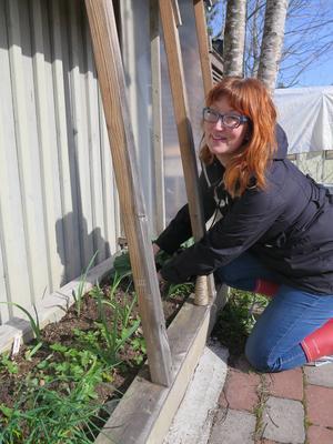 I odlingsvitrinen brukar Wilma ha tomater men i år är det framför allt vitlök som växer här.
