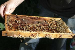 Företaget Trädgårdshonung tillverkar lokalt producerad honung från Roslagen.