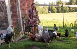 Det började med en handfull höns, nu har Tina Wallberg i Hällsätter i Trönö närmare hundra hönsfåglar.