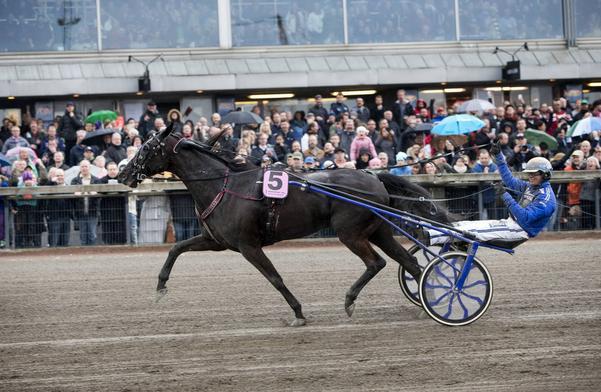 Your Highness som vinnare på Olympiatravet på Åby med Björn Goop i april i år. Nu missar stjärnhästen Elitloppet på grund av en halsinfektion.