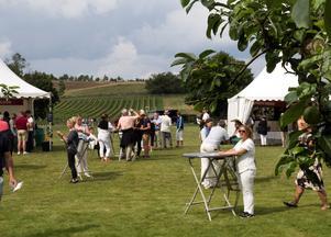 I somras anordnades på Österlen för första gången en vinfestival där ett antal av Skånes vinproducenter ställde ut sina egenproducerade viner.