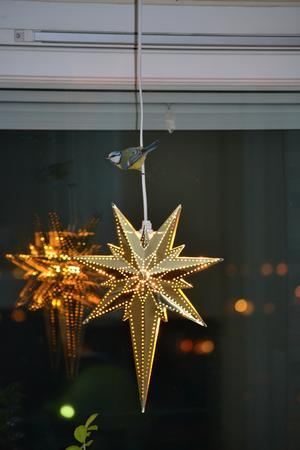 Den här krabaten hade flugit in när vi var borta på Julafton. Blev lite stökigt innan vi fick ut honom, men en bra bild.