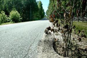 Hålen längs vägen märks ut med pinnar. En del är meterdjupa och sträcker sig in under vägbanan. Och enligt ortsbefolkningen dyker det ständigt upp nya så fort det regnar.