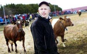 Gert Åhlund såg till att det 50-talet korna kom ut säkert från ladugården under kosläppet på Torsta.