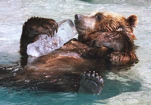 Ämnesomsättning som en vilande björn?