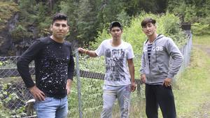 Rezahaskemi, Sherali och Samir har under fyra veckor jobbat för att göra fint i Klackbergs naturreservat.