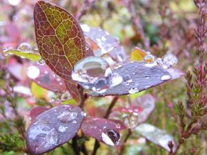 Närbild av blad med regndroppar
