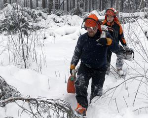 Kim Jensen och Karsten Lemke kommer klivande ut ur skogen med motorsågarna på axeln och bensindunken i handen.