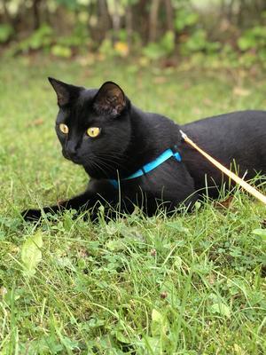 Sessan är en otroligt lekfull katt som är en mästare på att fånga bollar. Hon älskar att vara med sin familj - men bara på sina villkor, förstås... Hon mår som bäst när hon får sitta i fönstret och jaga flugor och andra flygfän - så länge det inte är spindlar, då flyr hon fältet! Bild: Linda Ek Femzén