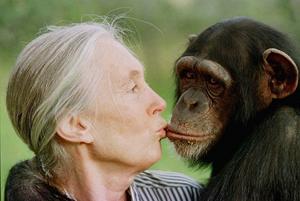 Jane Goodall och en av hennes apor. Osäkert vilken.Foto: Jean-Marc Bouju