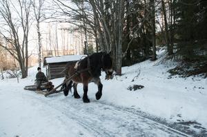 Under 40-talet var hästen en viktig arbetskraft i skogen.