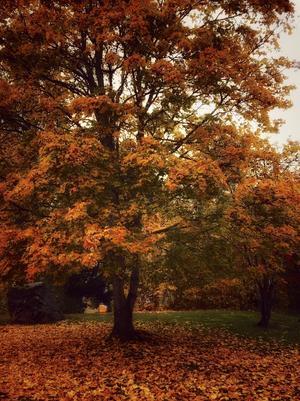 Hösten är ju så vacker! Tog bilden i Skinnskatteberg. Foto: Maria Andersson Ojala.