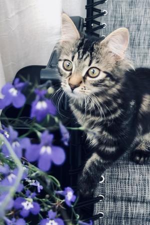 234) Det här är våran senaste familjemedlem. Ester heter hon och hon föddes i mars i år. Foto: Magnus Hansson