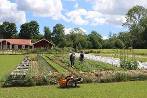 Miljöpartiet vill höja ambitionerna för andelen ekologiska livsmedel i Region Dalarna.