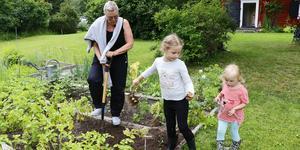 Då som nu ska grönsakerna skördas. Inger Börjesson och barnbarnen Ines och Judit plockar upp middagspotatisen.