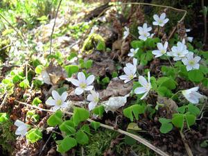 Det är många som har haft sin första naturupplevelse i Sörbyskogen.  Foto: Ayako Miki