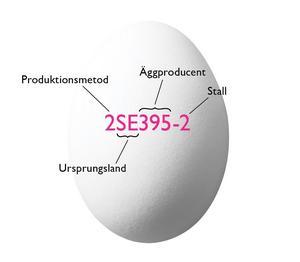 Bild: Svenska ägg