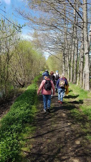 Promenad tillsammans med näktergalens sång. Foto: Lars Tjärnhammar