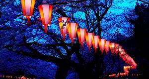 Ueno park i Tokyo. Här tänder man om kvällarna lanternor som hänger i körbärsträden.
