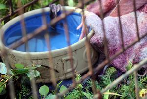Ägarna till de vanvårdade djuren som hittades i september är nu misstänkta för brott mot djurskyddslagen. Kvinnan som är från Gästrikland är sedan tidigare dömd för djurplågeri och har en lång historia av vanvård av djur bakom sig.