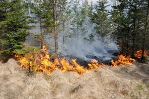 SMHI har gått ut med en varning om stor risk förgräsbränder på lördagen.