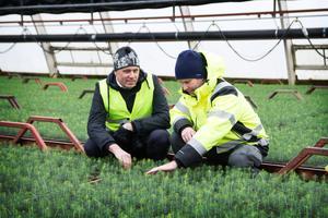 Andreas Rastbäck och Daniel Hägglund berättar att man förutom egna åtgärder också anlitat en extern miljökonsult för att utreda omfattningen och spridningen av frigolitkulorna.